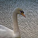 Wicken Swan by Lisa Kent
