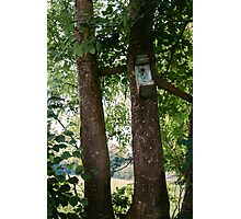 Bird House In A Tree Photographic Print