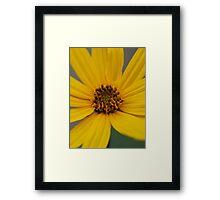 Heliantbus tuberosus flower Framed Print