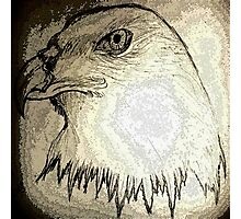 eagle-kartal Photographic Print