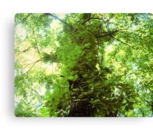 Winding Leaves Canvas Print
