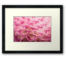 Dahlia Macro Close Up Framed Print