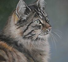 Domestic Cat by Charlotte Yealey