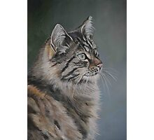 Domestic Cat Photographic Print