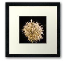 Fluffy Flower Seed Pods Framed Print