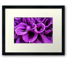 Purple Petals, flower Framed Print