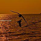 Sunset by Kornrawiee