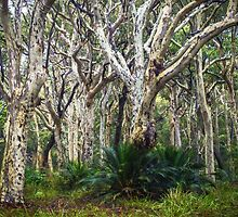 Spotted Gum Forest by Bette Devine
