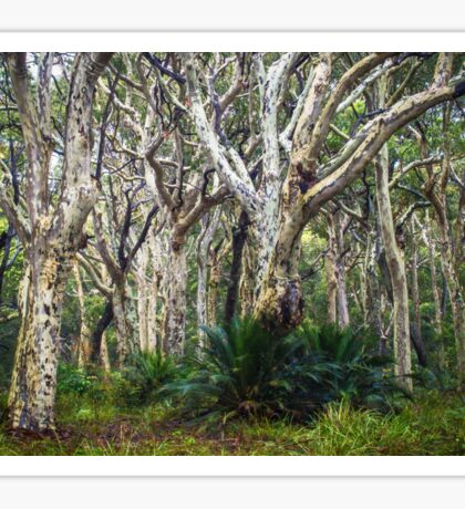 Spotted Gum Forest Sticker