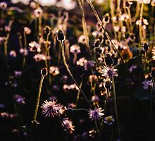 The flowers and the afternoon light by satriyo