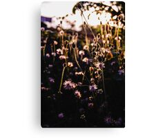 The flowers and the afternoon light Canvas Print
