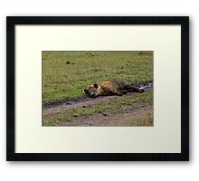 Spotted Hyena relaxing Framed Print