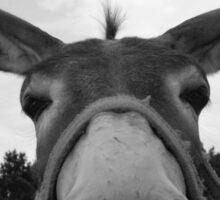 Donkey grey Sticker