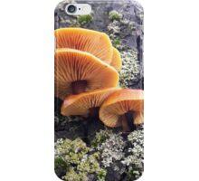 Underside of Velvet Shank mushrooms iPhone Case/Skin