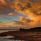 A Wonder Of Nature by Carolyn  Fletcher