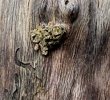 Naked wood by cuprum
