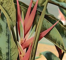 Heliconia Bloom by moulderart