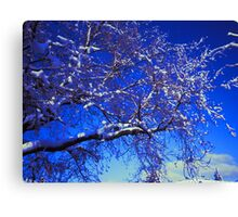 Snow on a Tree Canvas Print