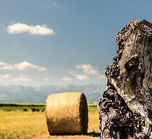 hay bale in the fields of italy by zakaz86