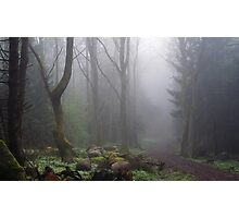 Mystical trail Photographic Print