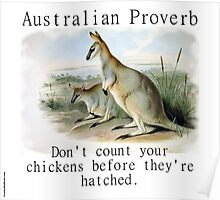 Don't Count Your Chickens - Australian Proverb Poster