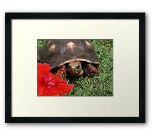 Tortoise and flower Framed Print