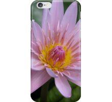 Waterlily iPhone Case/Skin