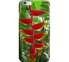 Heliconia 2 iPhone Case/Skin