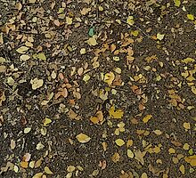 Autumn Leaves by ELUNED