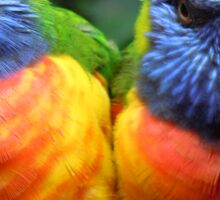 Lorikeets Sticker