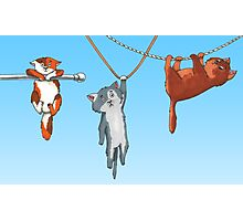 Hanging Cats of Babylon Photographic Print