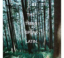 The Trees Speak Latin - The Raven Cycle Photographic Print