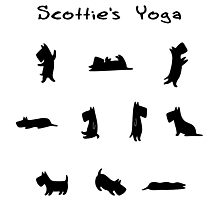 Scottie's Yoga Photographic Print