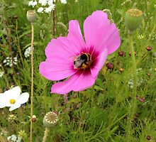 Bumble Bee perching on a Purple Flower by moonbubble