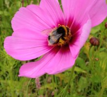 Bumble Bee perching on a Purple Flower Sticker