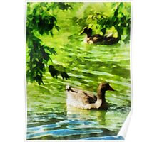 Ducks on a Tranquil Pond Poster