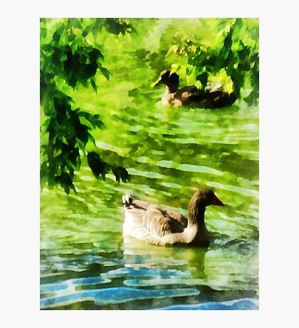 Ducks on a Tranquil Pond Photographic Print