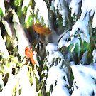 A Cardinal Winter by daphsam