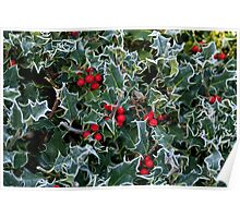Frost on Holly Hedge Poster