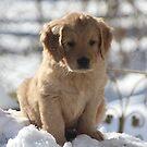 Winter I am Cute- Little Sapling Gang by goldnzrule