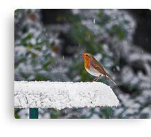 Robin on Snowy Feeder Canvas Print