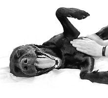 Labrador smile by sydneythelab