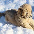 Rosco- Snow Play- Little Sapling Gang by goldnzrule