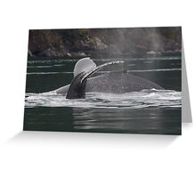 Humpback Whales in Motion Greeting Card