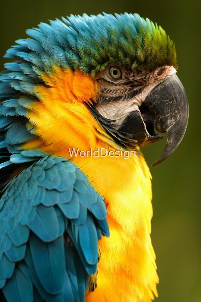 Macaw with Ruffled Feathers by William C. Gladish, World Design