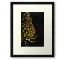 exquisite exotic bloom Framed Print