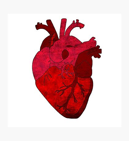 Human heart. Photographic Print