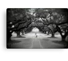 Oak Ally Framed Canvas Print