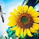 Soaring Bird Sunflower by Phil Perkins