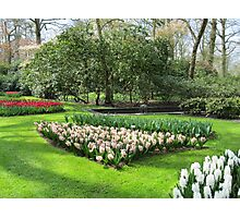 Beds of Red Tulips and Pink Hyacinths - Keukenhof Gardens Photographic Print